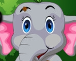 Baby Elephant Accident Care